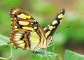 Schmetterlinge-Insekten