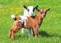 Tiere-auf-dem-Bauernhof