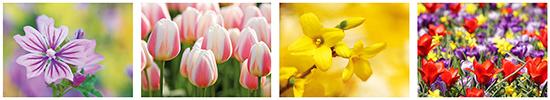 Blumen postkarten , postkarten mit blumenmotive