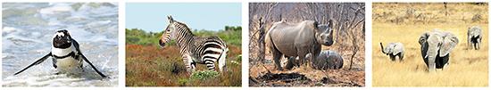 Postkarten Afrikanische tiere, Tiere in Afrika, Postkarten Tierbilder / Tiermotive