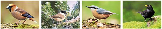 Postkarten Waldvögel, postkarten vogel, vogel motive, vogel bilder