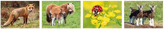 Tierpostkarten, Postkarten mit Tiermotive, Postkarten mit Tierbilder