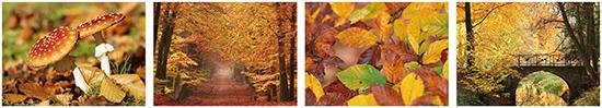 Herbst Postkarten
