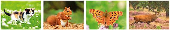 Tierpostkarten, Postkarten Tiere