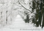 ansichtkaart winter laantje, winter postcard landscape, winter Postkarte Winterlandschaft