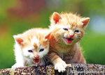 Ansichtkaart kittens, postcard kittens, Postkarte Katzenjunges