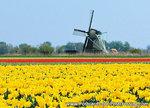 ansichtkaart molen P in Oudesluis, mill postcard, Mühle Postkarte