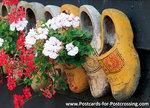 Klompen met geraniums, Clogs with geraniums, Clogs mit Geranien