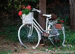 ansichtkaart fiets, postcard bicycle, postkarte Fahrrad