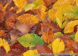 Ansichtkaart herfstbladeren, Postcard fall leaves, Postkarte Herbstblätter