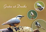 Ansichtkaart vogels in Drenthe, Postcard birds in Drenthe, Postkarte Vögel in Drenthe