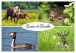 ansichtkaart dieren in Drenthe, postcard animals in Drenthe, Postkarte Tiere in Drenthe