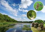 Ansichtkaart groeten uit Drenthe, postcard greetings from Drenthe, Postkarte Grüße von Drenthe