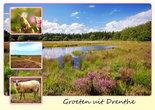 Ansichtkaart heide in Drenthe, Postcard heather in Drenthe, Postkarte Heide in Drenthe