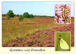 Ansichtkaart heide in Drenthe, Postcard heath in Drenthe, Postkarte Heide in Drenthe