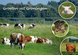 Ansichtkaart groeten uit Groningen, Postkarte grüße aus Groningen