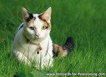 Kat met kattenbelletje
