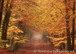 ansichtkaartherfstlaan kaart, postcard Autumn lane, postkarte Herbst lane