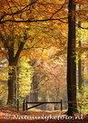 Herfstkaarten, ansichtkaartherfst laantje, postcard Autumn lane, postkarte Herbst lane