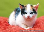 Ansichtkaart Kitten op kussentje, postcard Kitten on pillow, Postkarte Kätzchen auf Kissen