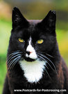 Ansichtkaart Kater Joep, postcard Tomcat Joep, Postkarte Tomcat Joep