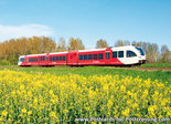 ansichtkaart Arriva trein met koolzaadveld, train postcard Arriva, Zug Postkarte