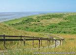 Ansichtkaart natuurgebied het Oerd - Ameland, Postcard Nature reserve het Oerd - Ameland