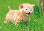 kitten kaart - ansichtkaart kitten