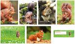 Ansichtkaarten set eekhoorns