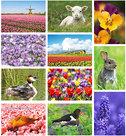 Lente kaarten set, spring postcard set, Frühling Postkarten Set