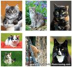 katten ansichtkaartenset