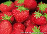 ansichtkaart aardbeien kaart, postcard strawberries, postkarte Erdbeeren