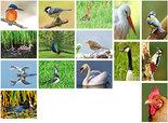 kaartenset van vogels