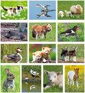 Postkaarten / ansichtkaarten set dieren