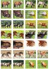 Paarden stickers