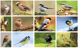Ansichtkaarten vogels