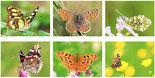 Vlinder kaarten set - Butterfly Postcard set - Schmetterlinge Postkarten Set