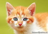 Ansichtkaart N-Joy de poes, postcard cat N-Joy, Postkarte Katze N-Joy
