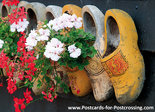 Klompen met geraniums, Clogs with geraniums, Clogs mit Geranien