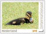 Postzegels voor Postcrossing - jong eendje