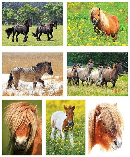 Postkarten set Pferde und ponys