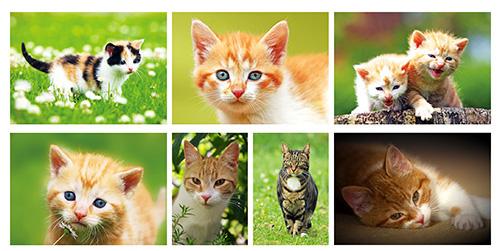 Katzen postkartenset