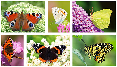 Schmetterlinge postkartenset