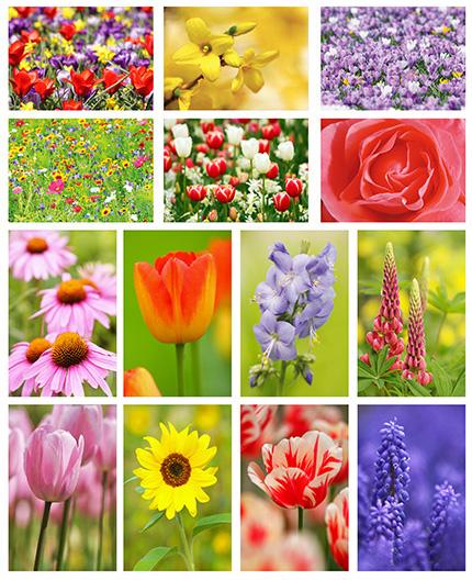 Blumen postkartenset