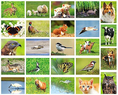 Postkartenset Tiere