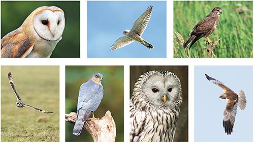 Greifvögel Postkarten Set