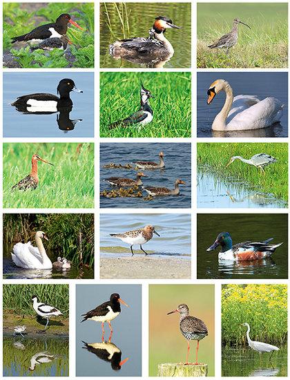 Vögel Postkartenset