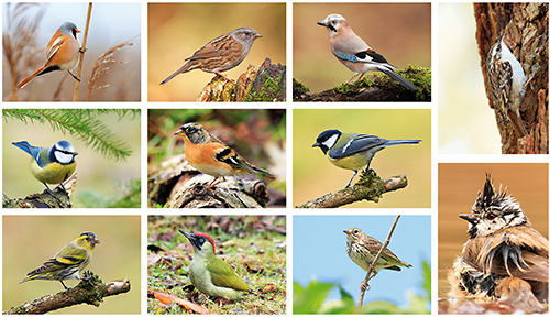 Vögel Postkarten Set