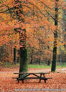 Ansichtkaart herfstbankje, Postcard autumn bench, Postkarte Herbst Bank