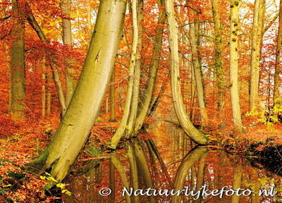 Herfstkaarten, ansichtkaart herfst Twickelervaart, postcard Autumn Twickelervaart, postkarte Herbst Twickelervaart